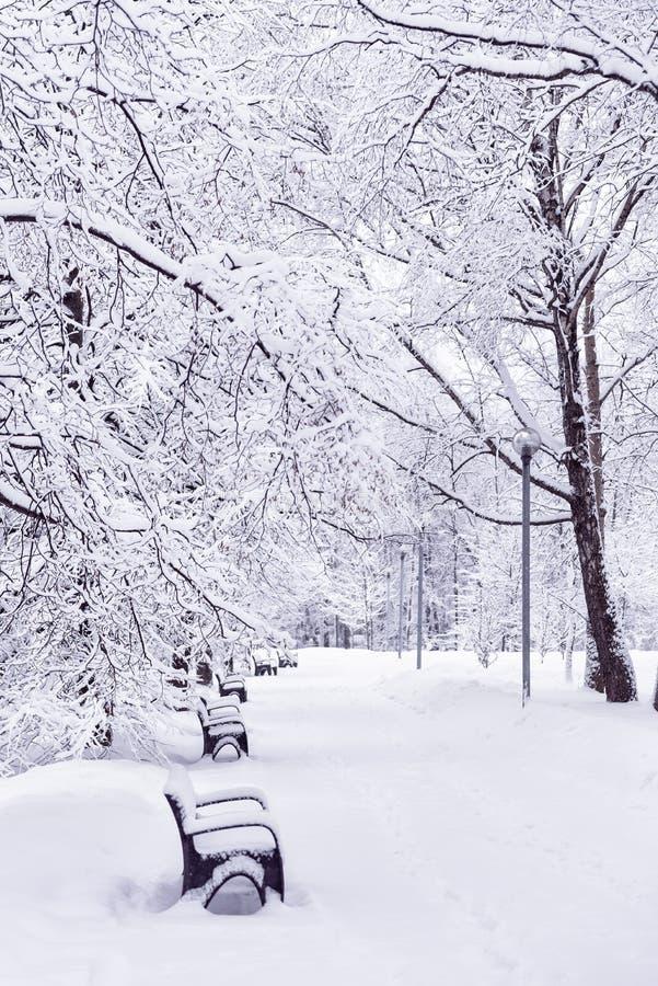 在雪的长凳在冬天公园 在分支的雪 冬天 斯诺伊天气 库存照片
