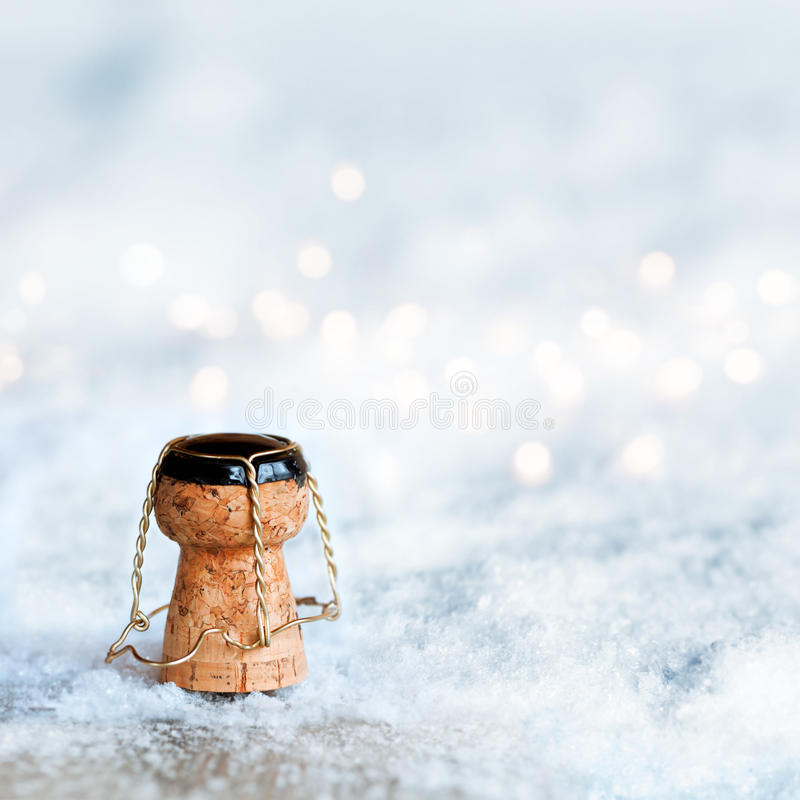 在雪的香宾黄柏 库存图片