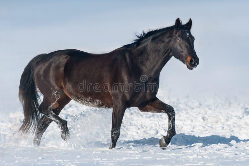 在雪的马 库存图片