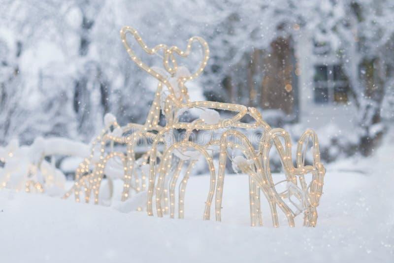 在雪的驯鹿雪橇 免版税图库摄影
