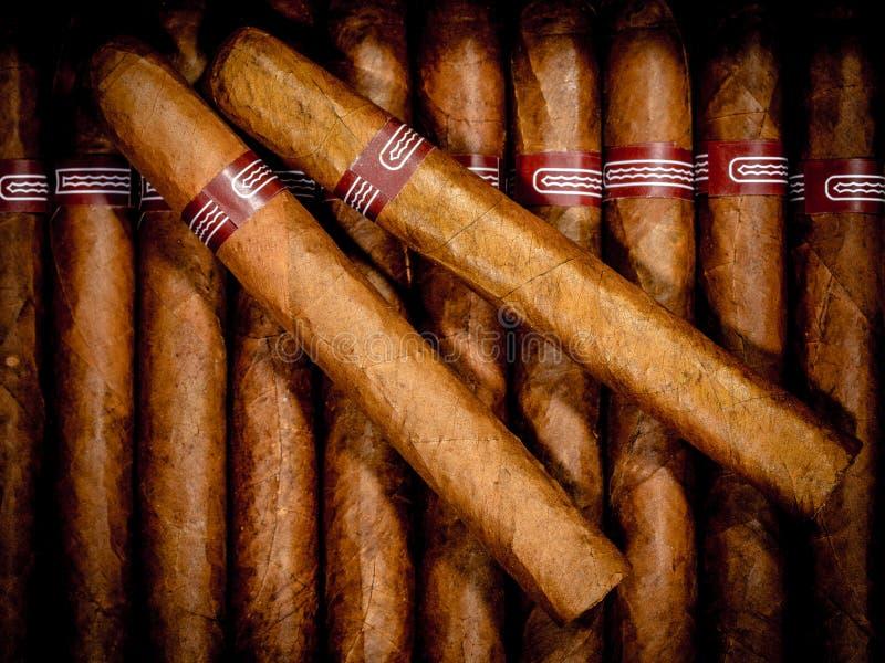 在雪茄盒的雪茄 库存照片