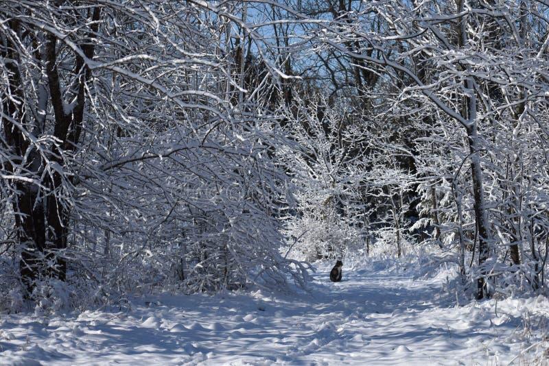 在雪足迹的猫 库存照片