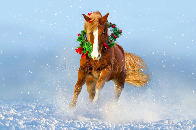 在雪跑的马 背景在红色圣诞老人白色的圣诞节图象 免版税库存照片