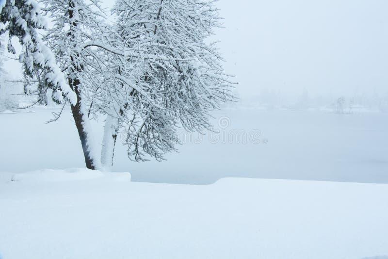 在雪风暴的皮船 免版税库存图片