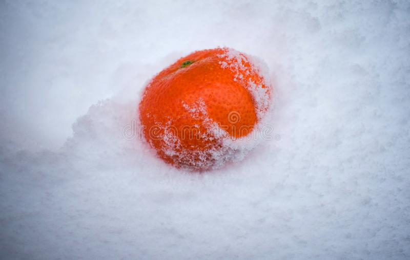 在雪,柑桔,结冰的天,普通话的蜜桔在雪落 免版税库存图片