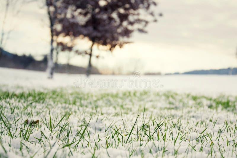 在雪,灌木的绿草在背景中,你好春天概念 库存图片