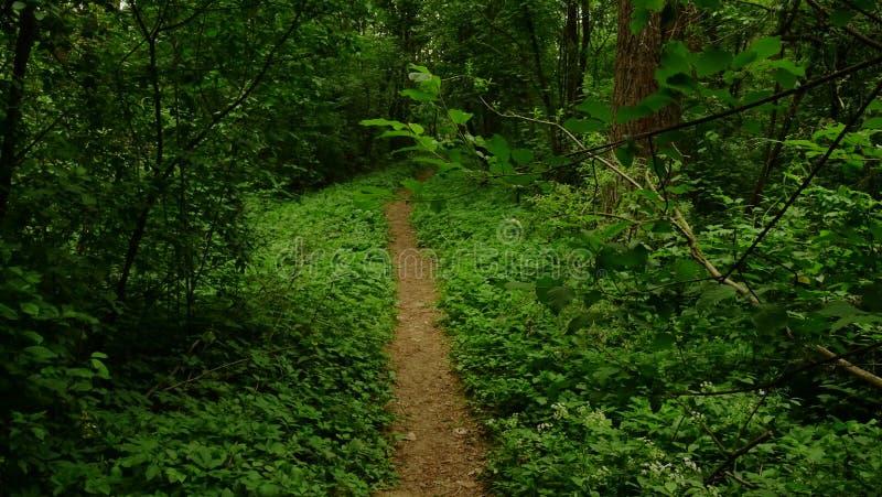 在雷暴前的春天森林 免版税库存照片