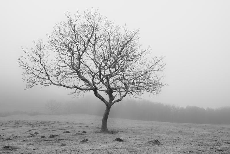 在雾中的孤立树在伊伦西班牙 免版税库存图片