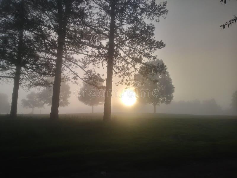 在雾内 库存照片