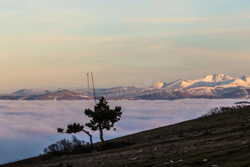 在雾和山上海的一个树剪影与雪在距离 库存照片
