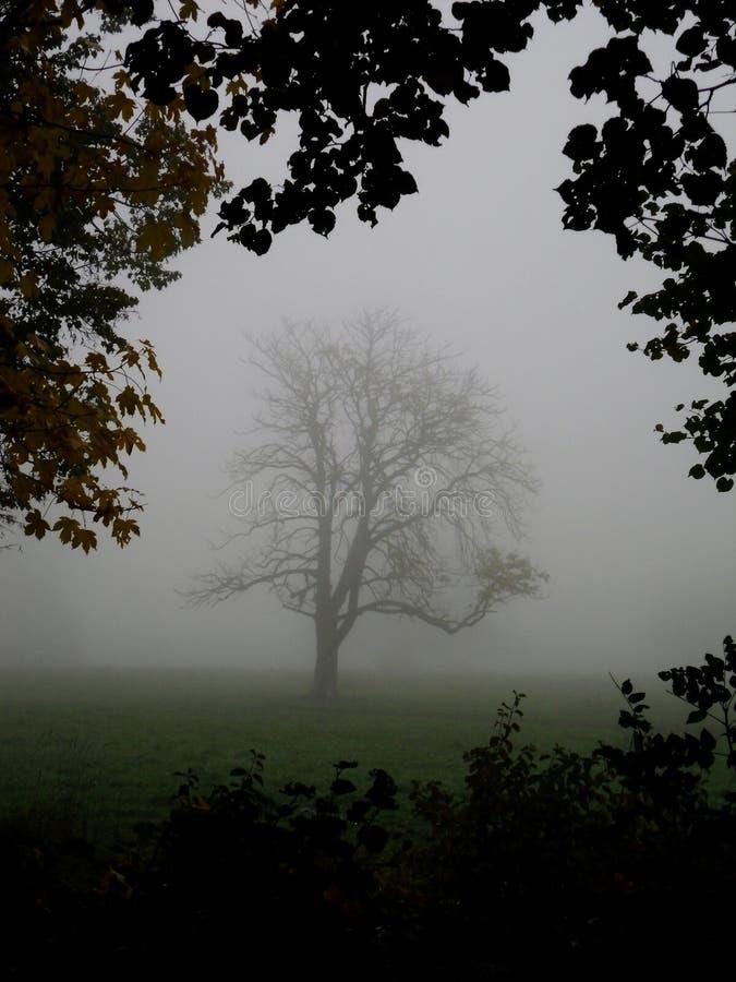 在雾掩藏的树 免版税库存照片