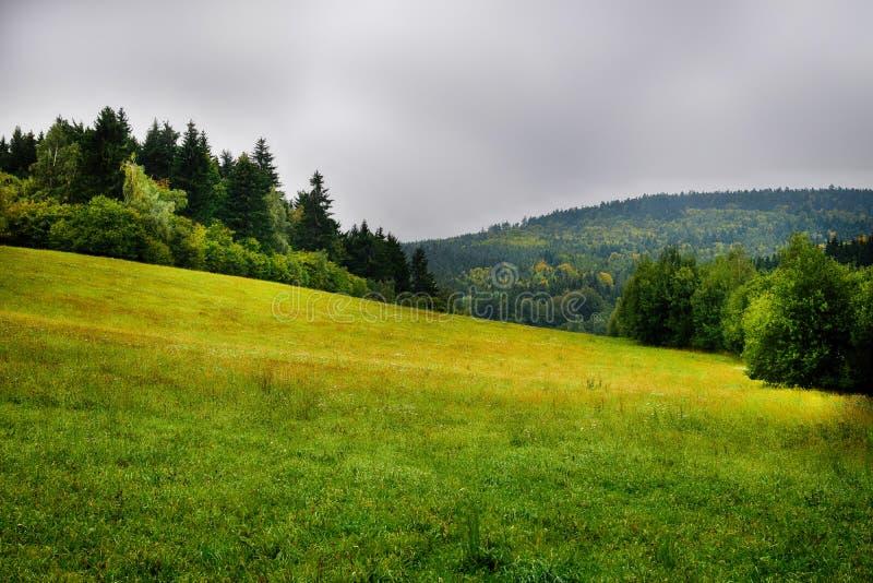 在雾的小山 r 与森林、领域和树的高地 库存图片