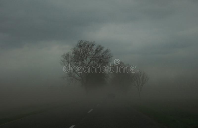 在雾的柏油路 免版税库存图片