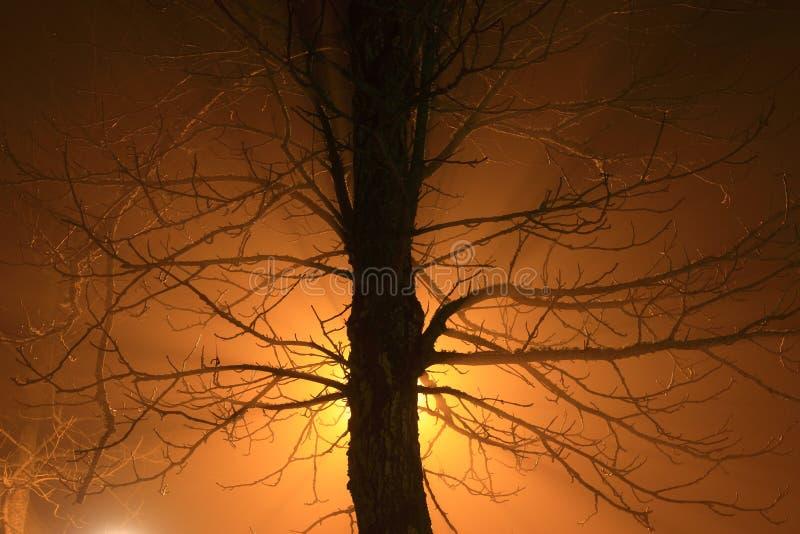 在雾的树与背后照明 图库摄影