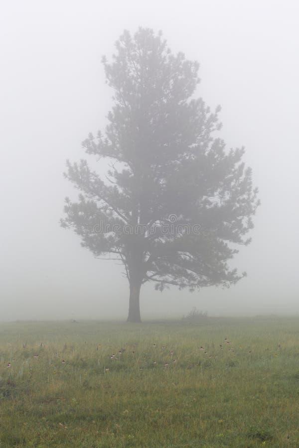 在雾的树在Custer国家公园在南达科他 免版税图库摄影