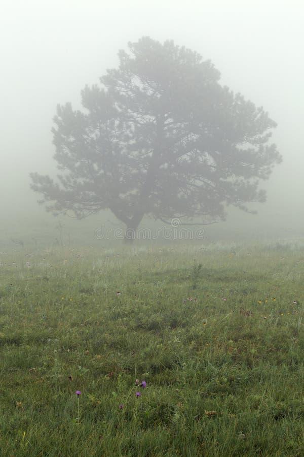 在雾的树在Custer国家公园在南达科他 免版税库存照片