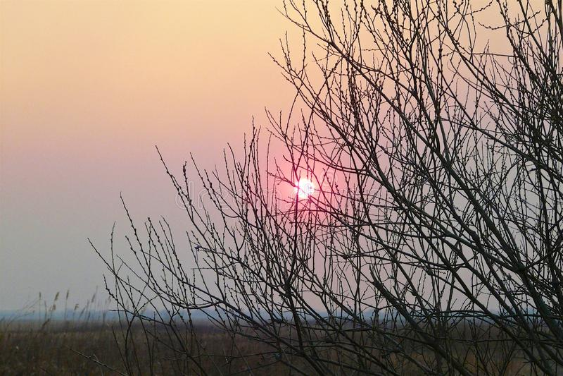 在雾的桃红色太阳通过不生叶的分支发光 库存照片