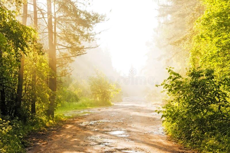 在雾的森林公路 库存图片