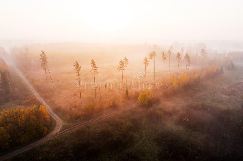 在雾的清楚区域 库存照片