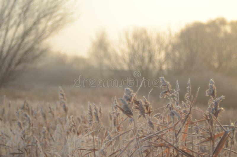 在雾的秋天早晨 免版税库存图片