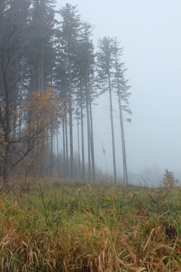 在雾的秋天树 免版税图库摄影