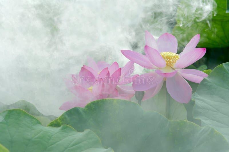 在雾的莲花 库存照片