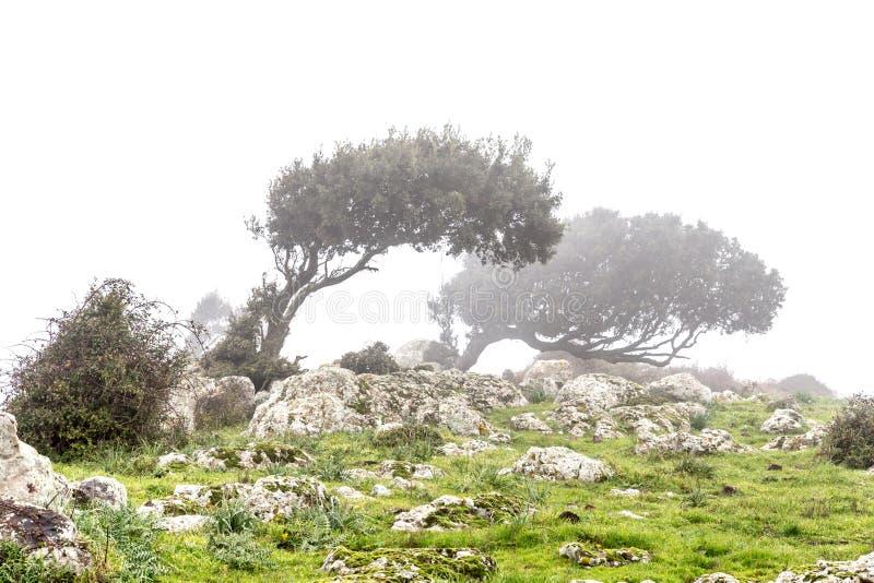 在雾的被风吹扫发辫 免版税库存图片