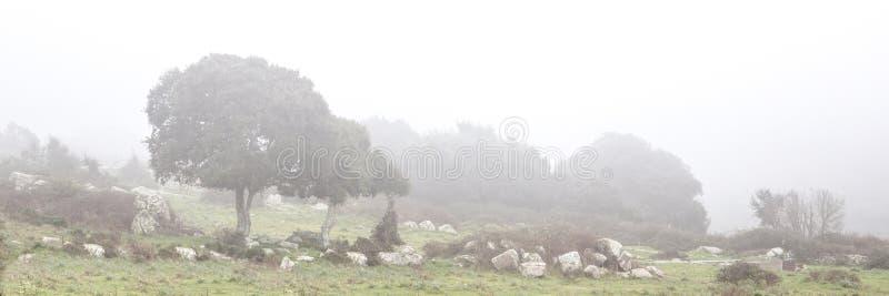 在雾的被风吹扫发辫 库存照片
