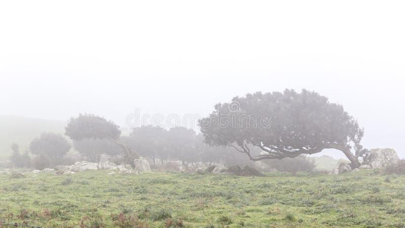 在雾的被风吹扫发辫 免版税库存照片