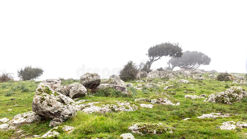 在雾的被风吹扫发辫 图库摄影