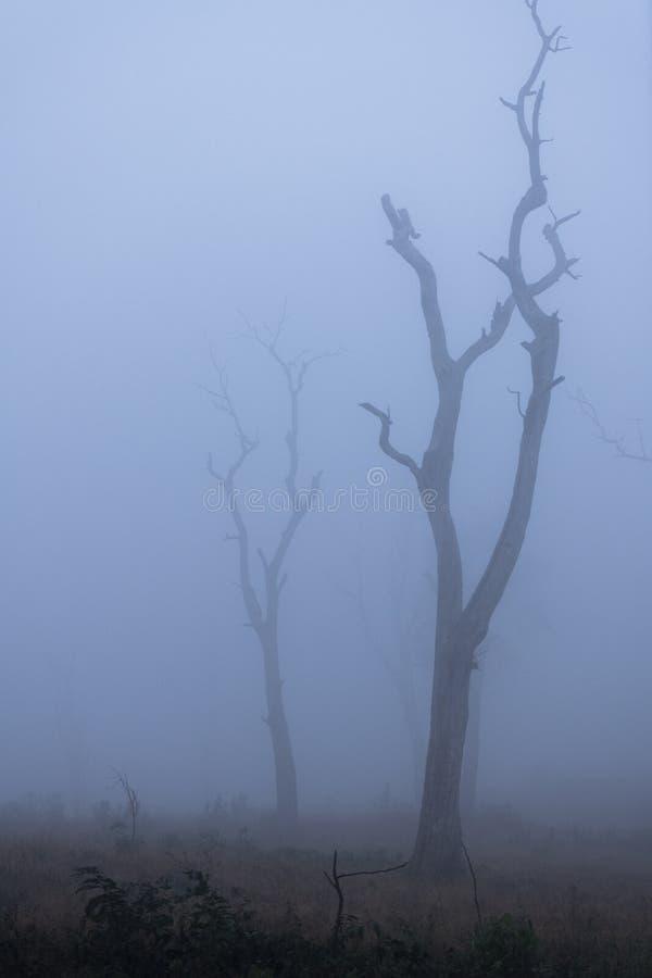 在雾的贫瘠树在Mudumala老虎储备,Tamilnadu,印度 免版税库存照片