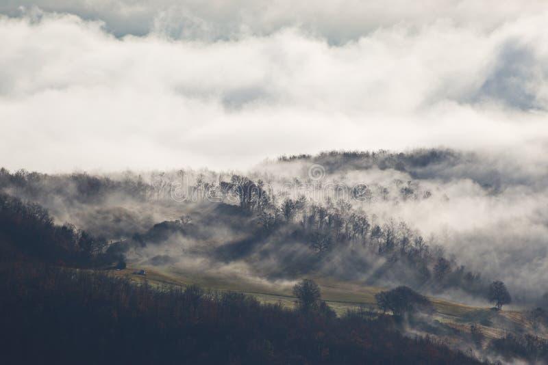 在雾的阳光 库存照片