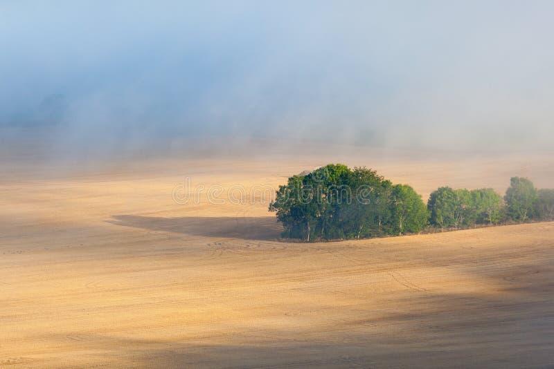在雾的领域 库存图片