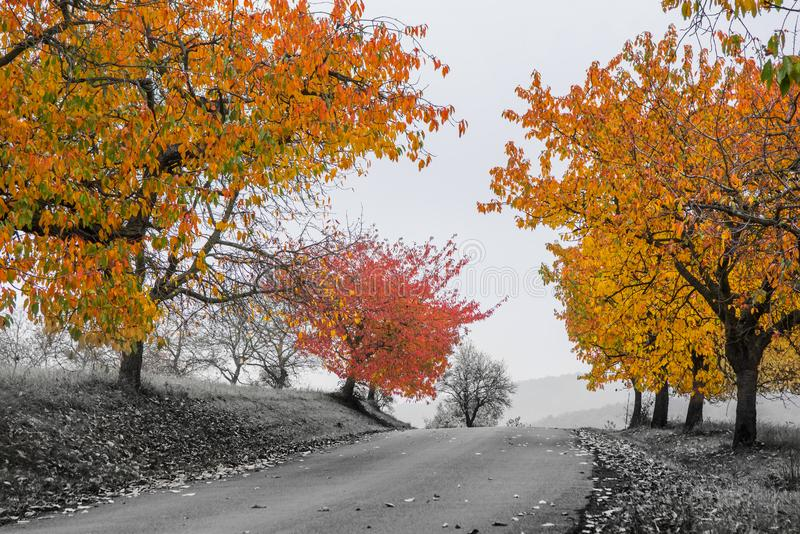 在雾的黄色叶子 图库摄影