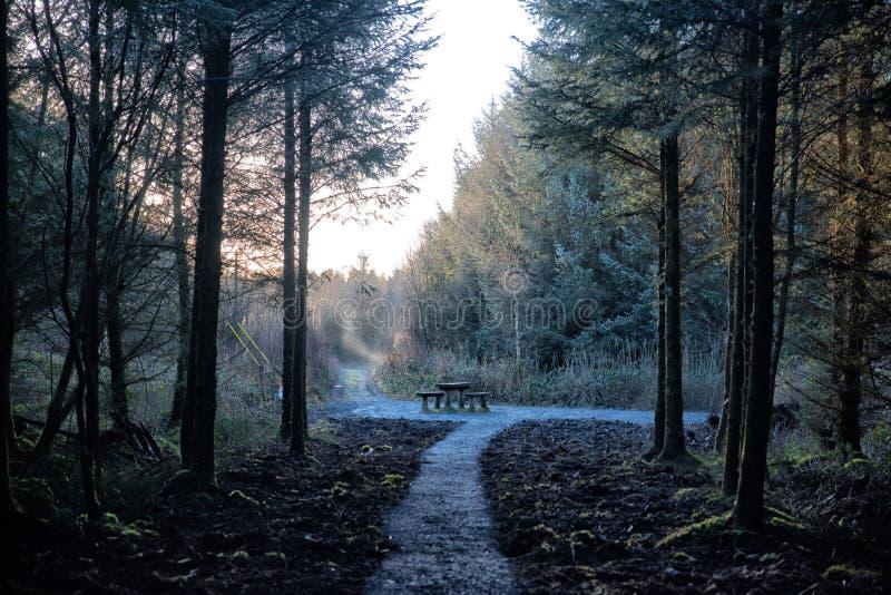 在雾蒙的树林里野餐 库存图片