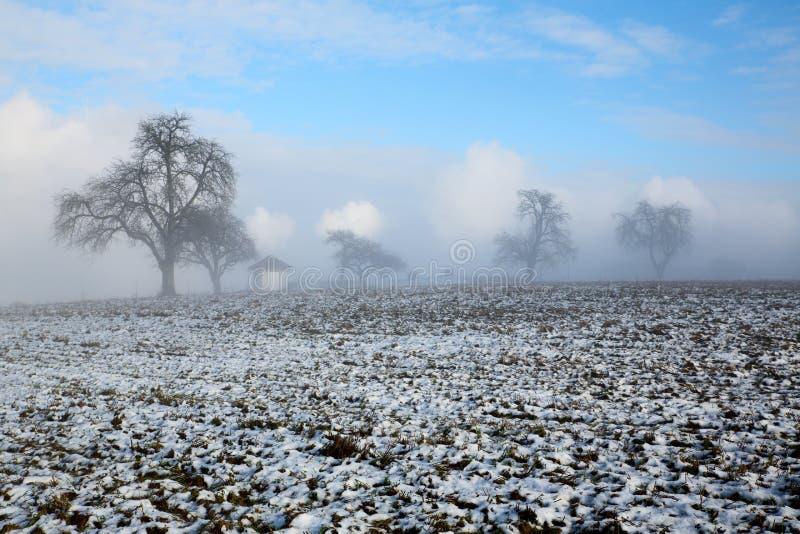 在雾雪小山的老冬天结构树 免版税库存图片