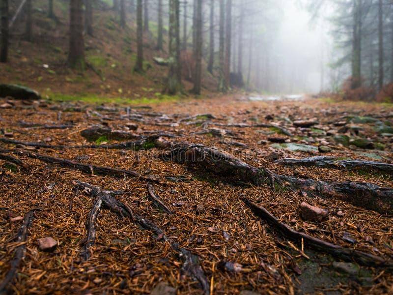 在雾黑森林的模子 免版税库存图片