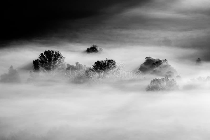 在雾黑白照片的树 免版税库存图片