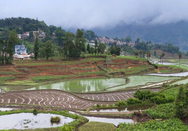在露台的米的村庄在云南,中国调遣 免版税库存图片