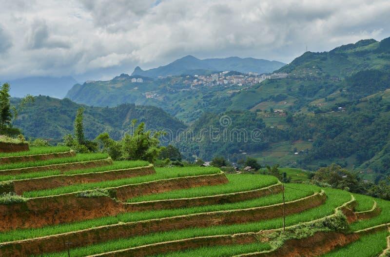 在露台的米领域在SAPA的rainny季节 库存图片