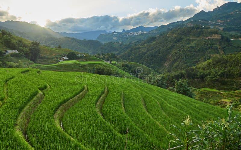 在露台的米领域沙坝镇,越南 免版税库存照片