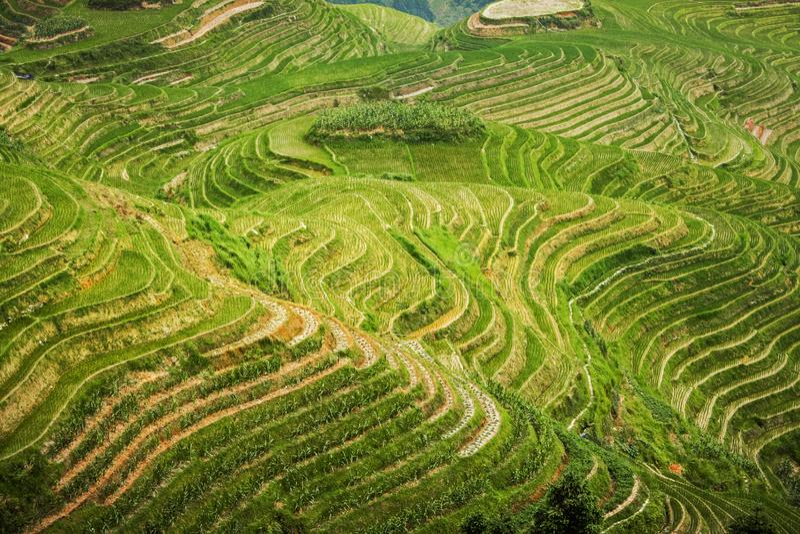 在露台的美好的风景米领域 龙脊米大阳台龙的中坚在龙胜 中国 库存照片