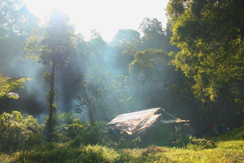 在露营地的早晨阳光 免版税库存照片