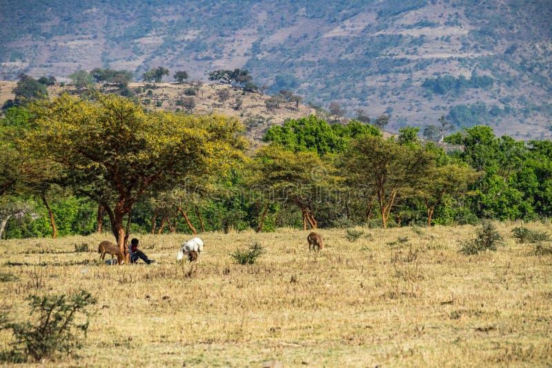 在青尼罗河下降附近的风景视图在埃塞俄比亚,非洲的苦味药地区 库存图片
