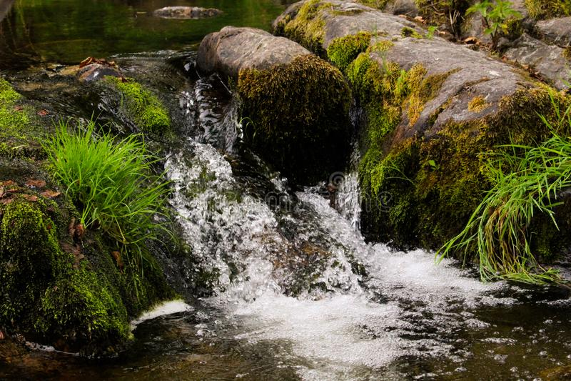 在青苔中间的小的瀑布 库存照片