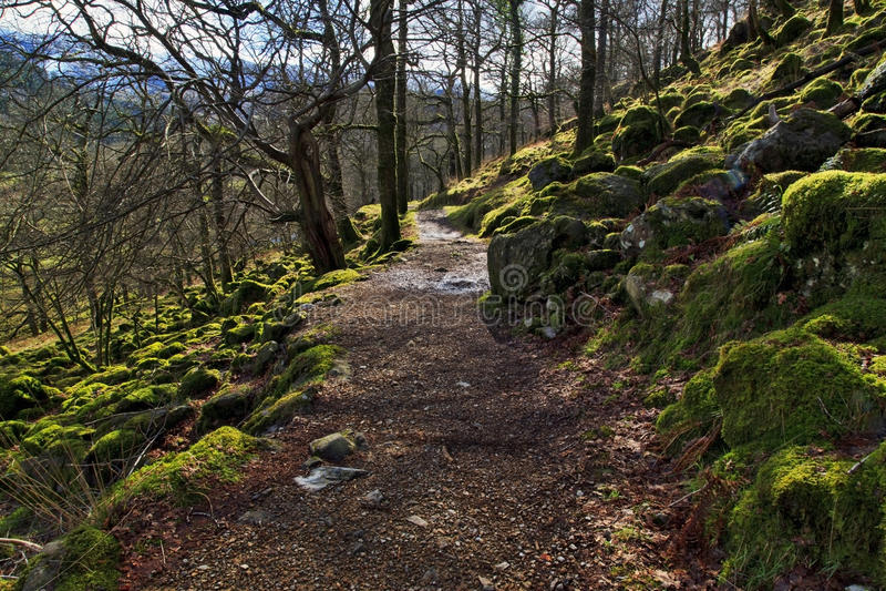 在青苔和树盖的岩石被撒布沿沃特金斯道路Snondon 免版税库存图片