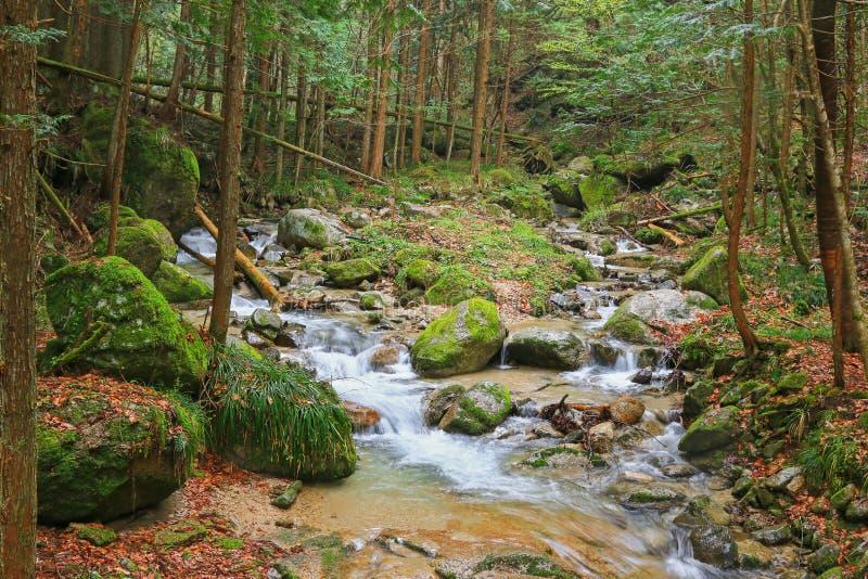 在青苔和石头盖的瀑布在Nakasendo走的足迹 免版税图库摄影