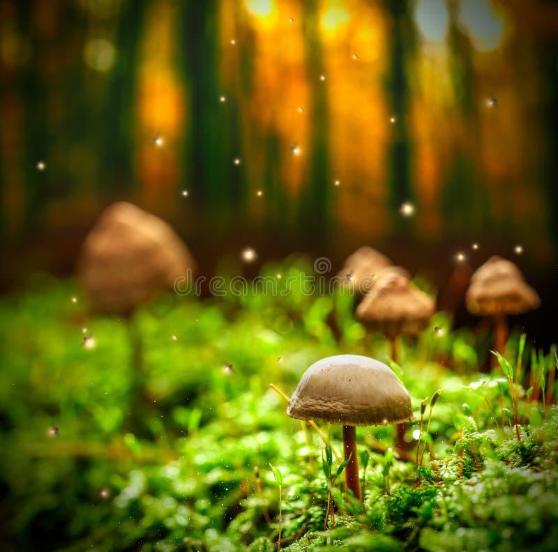在青苔和萤火虫的小蘑菇在黄昏的森林里 免版税库存照片