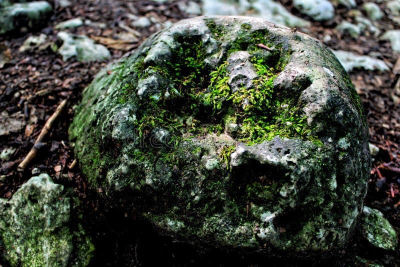 在青苔的一块石头 免版税库存图片