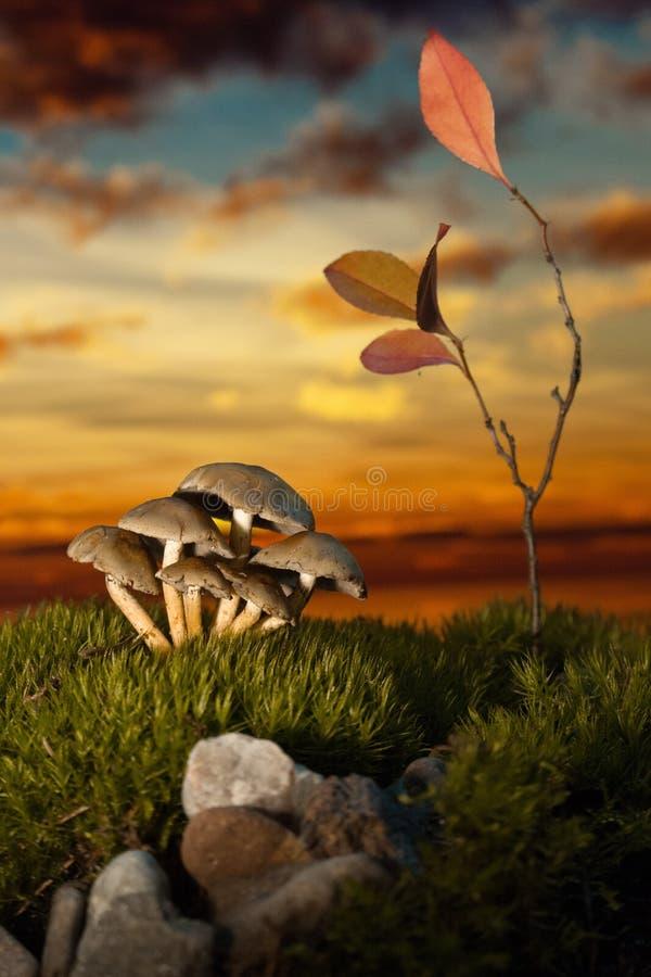 在青苔的蘑菇在日落 库存照片